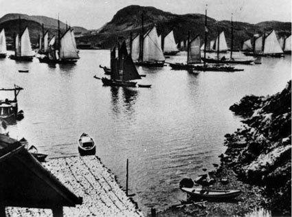 Schooners in Burin Harbour, Circa 1880's